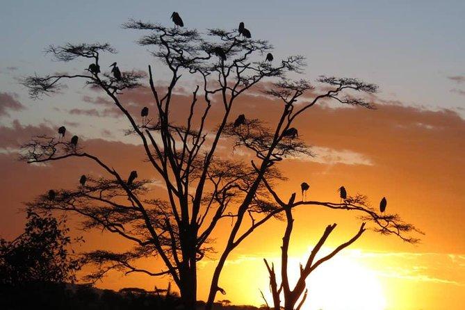 5 Day Safari Tarangire, Serengeti & Ngorongoro Crater