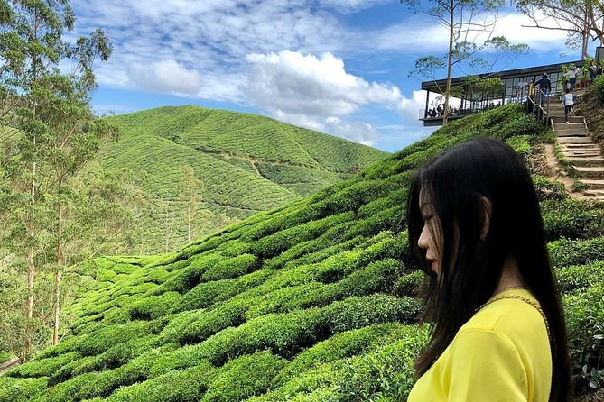 Private Full-Day Cameron Highlands Nature Tour from Kuala Lumpur