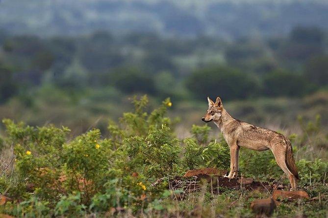 One Day Wildlife and Birding Trail Around Pune