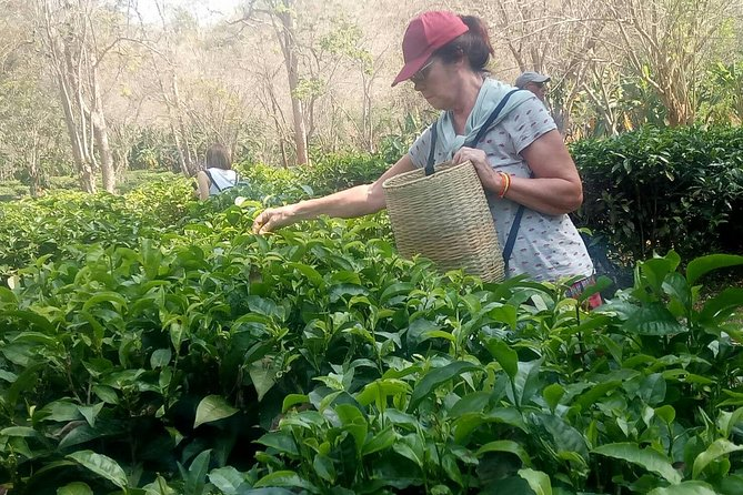 Chiang Mai Private Tour with Tea Plantation, Karen Village, Doi Suthep