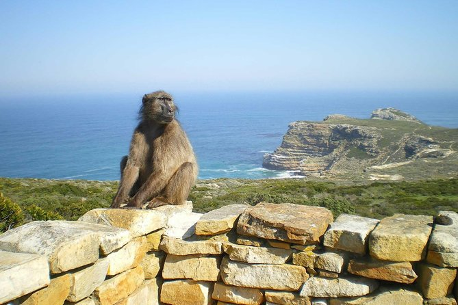 Private Cape Of Good Hope Tour with Table Mountain Ticket Including Park Fees