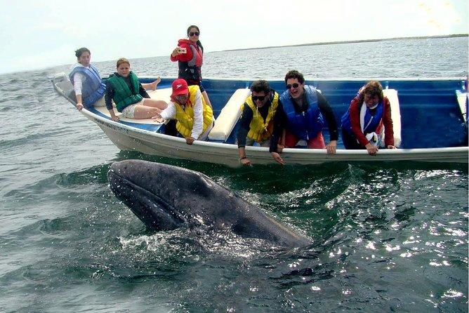 Whales Tour from La Paz