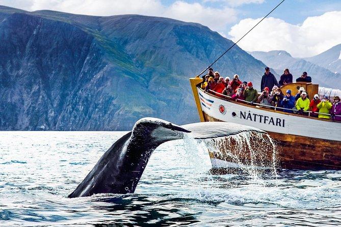 Traditional Oak Ship Whale Watching Tour From Husavik