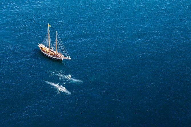 Whale Watching on a Traditional Oak Sailing Ship from Husavik