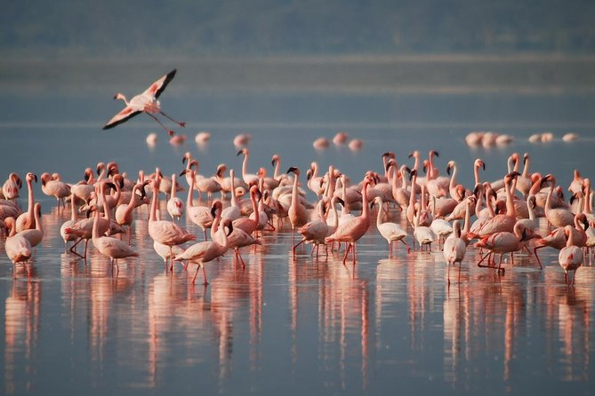 3 Days Tarangire, Lake Manyara and Ngorongoro National park