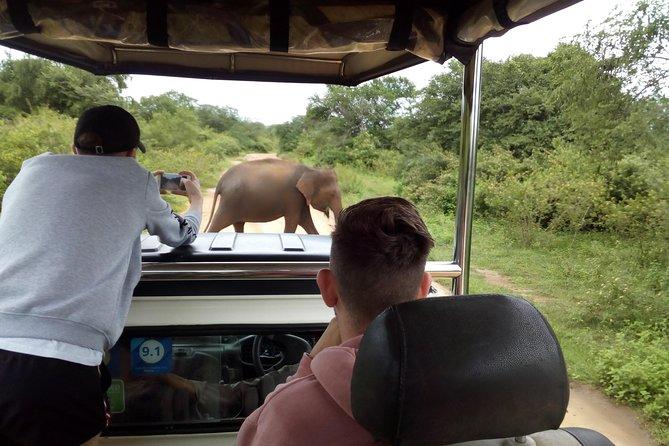 Private Tour : Udawalawe National Park Safari