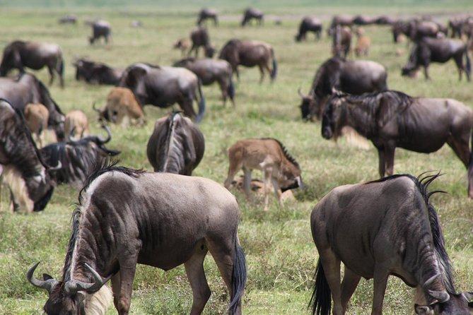 4-Day Safari in Tarangire, Serengeti & Ngorongoro (Mid-range)