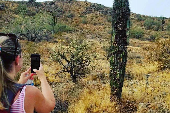 Private Solo Sonoran Desert 1.5 Hour Hiking Adventure