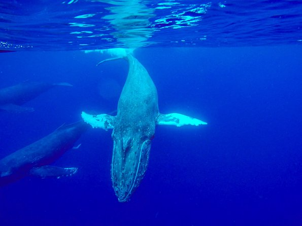 Kayak & Whale Watch Private Tour (7am-10am)