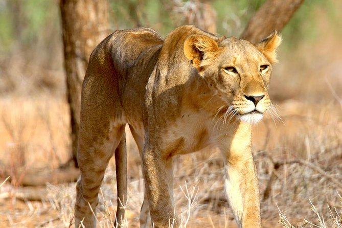 Tanzania Incredible Simba Safari - 5 Days