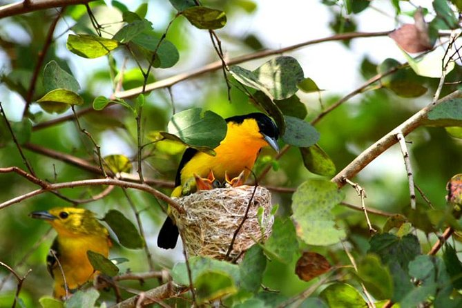 Bird Watching Sri Lanka