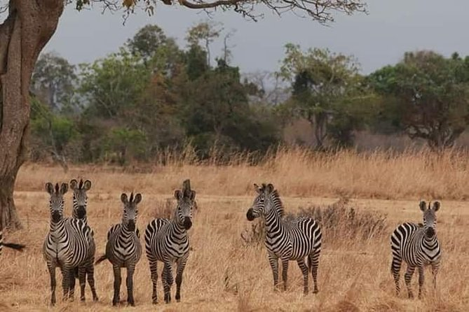 Day trip Safari to Mikumi National Park from Morogoro