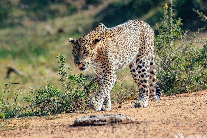 Half Day Safari in Yala National Park from Hambantota Harbor