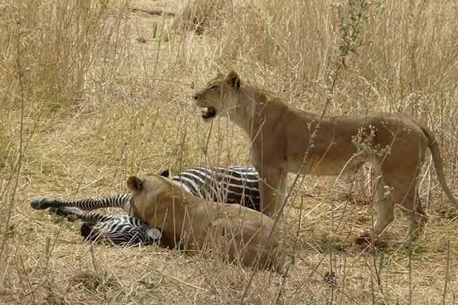 4days 3nights Safari To Mikumi, Ruaha National park And Maasai Village