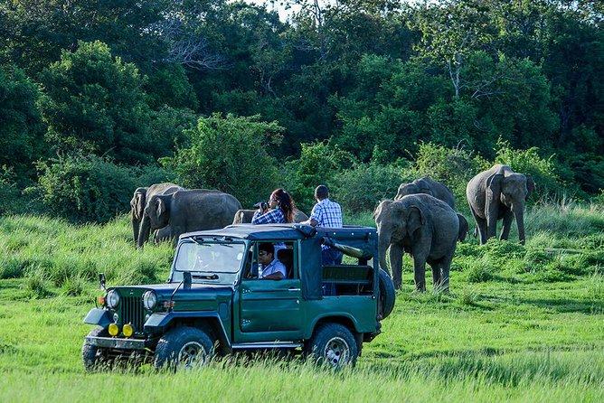 Udawalawe Safari Day Trip from Kalutara & Wadduwa- All Inclusive