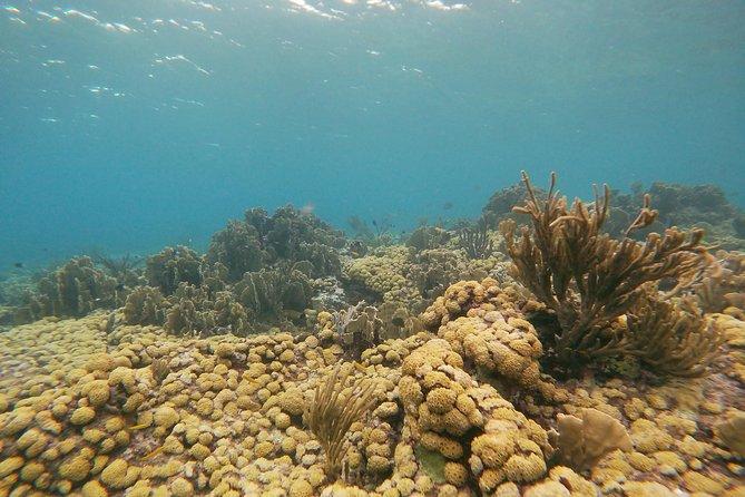 Private snorkel excursion to a pristine coral reef in Aruba - Eco-friendly!