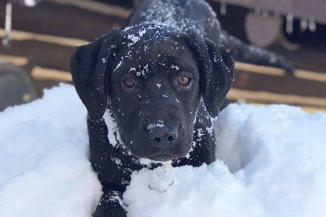 Jackson Hole Dog Sledding Adventure