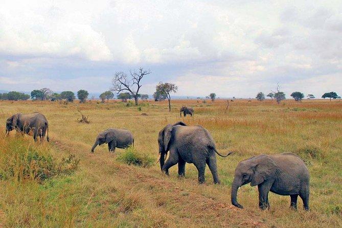 Mikumi national park 3 days safari
