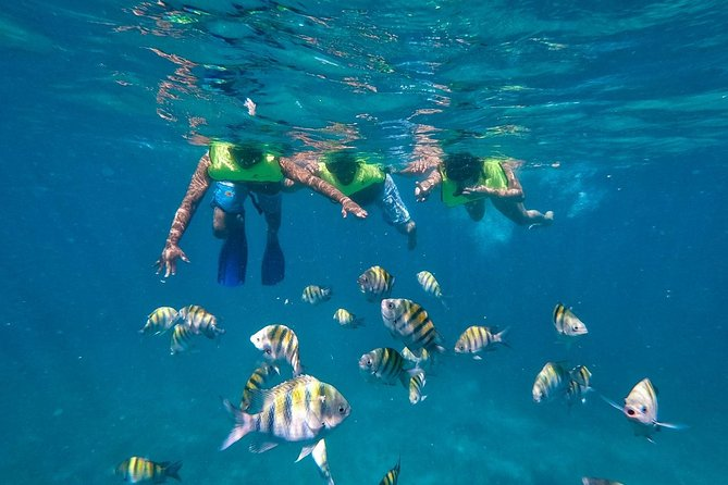 Catalina Island Private Cruise with Snorkelling