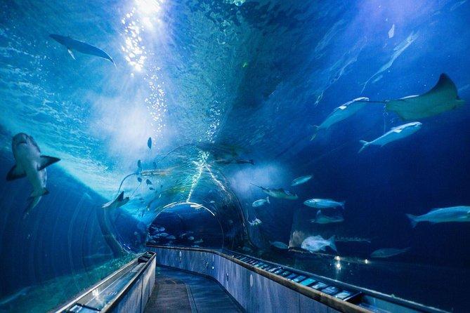 Nature Lover's Experience: Muir Woods Tour with Aquarium Visit