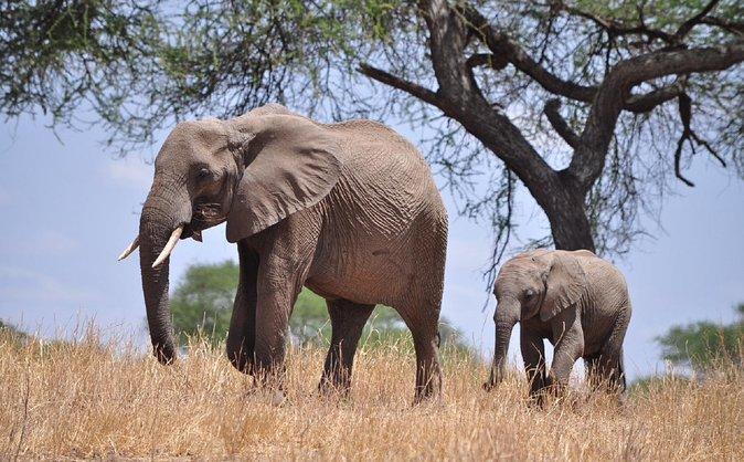 4 Days Midrange Tanzania Safari