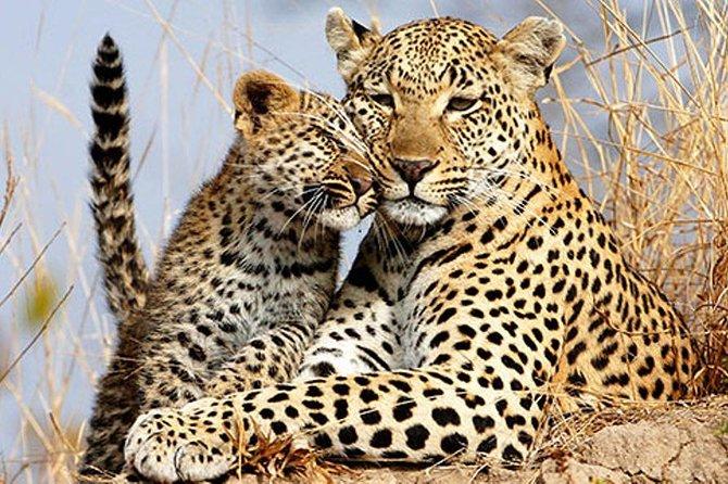 Serengeti to Ngorongoro Crater safaris