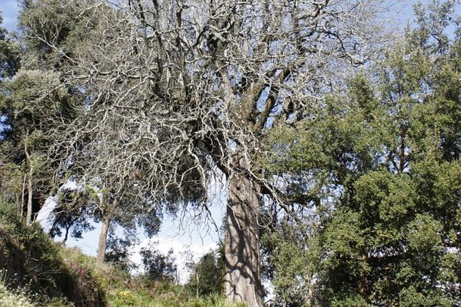 Serra de Monchique Highlights - 4x4 Private Safari Tour