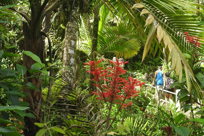 Rainforest Nature Walk from San Juan in Puerto Rico