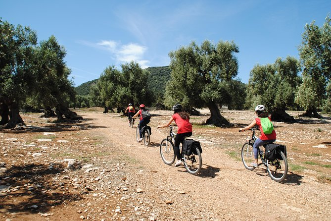 Bike tour among millenary olive trees, farms, rupestrian churches and underground oil mills
