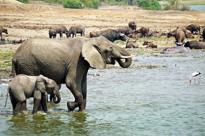 Complete Wildlife Uganda 6 Days Safari Tour