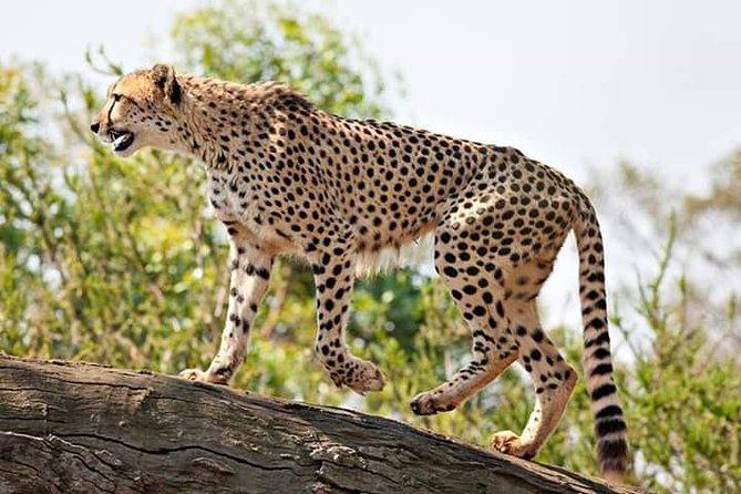 2 Days / 1 Night - Tsavo Explorer Safari