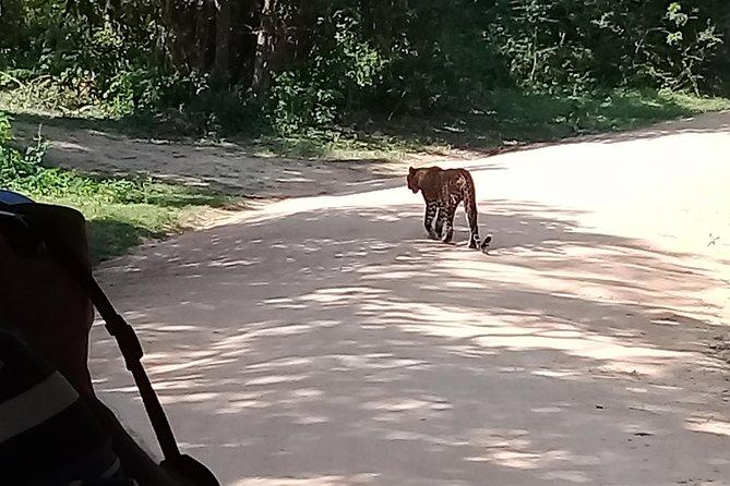 Yala Safari From Kaluthara - Bantota - ahaungalla -Hikkaduwa - And Surround