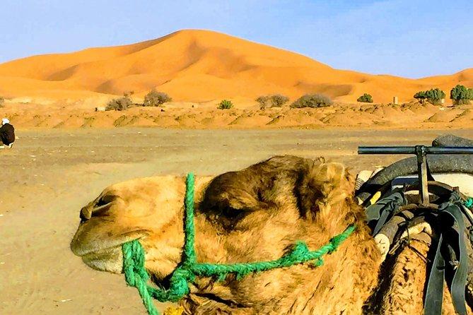 5 Days tours from Tangier to Chefchaouen, Fez, Merzouga Desert and Marrakech