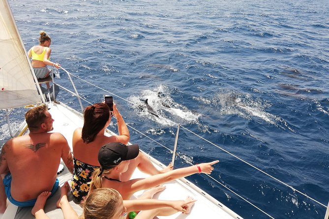 Half day sailing trips