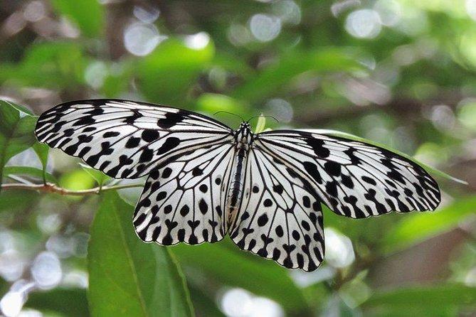 Sinharaja Rainforest Tours