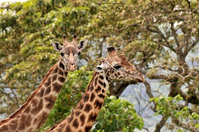 Tanzania Southern Circuit 8 Days Mikumi Ruaha Selous Udizungwa wildlife parks