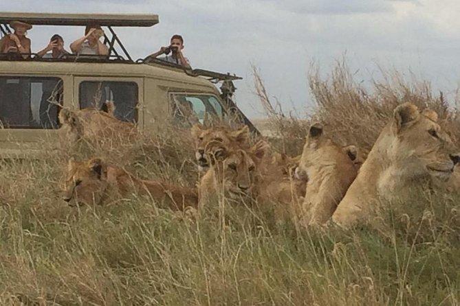 4 Days Tanzania Safari (Tarangire, Ngorongoro & Serengeti) With Africa Natural