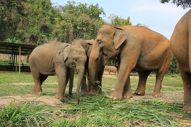 Half-Day Ethical Elephant Sanctuary with Round-Trip Transfer from Phuket