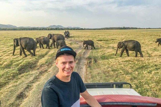 Minneriya National Park Safari from Dambulla