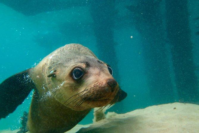 Dolphin and Seal Swim Reef Snorkel Boat Tour Mornington Peninsula