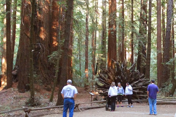 Private Russian River Day Trip from San Francisco: Redwoods and Wine Country