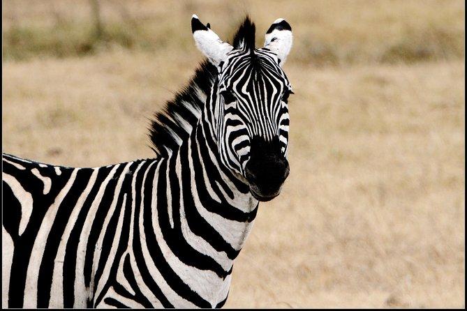 Ngorongoro Crater Highlands and Lake Manyara with 3 days lodge safari extra