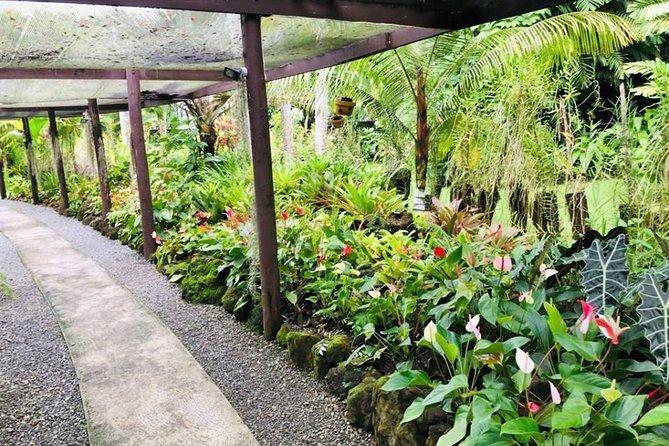 Private Denarau Shore Excursion - Temple, Shopping, Market, Garden & Mud Pool