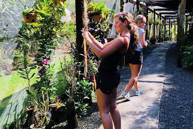 Nadi Sightseeing & Mud Pool Tour