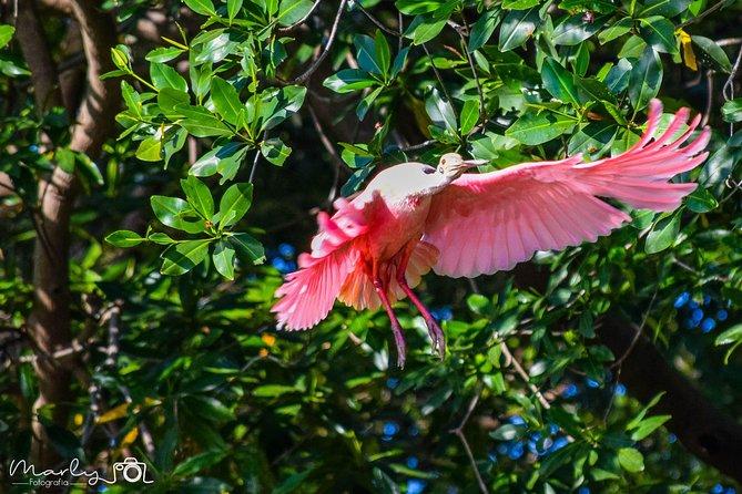 Palo Verde National Park Day Trip