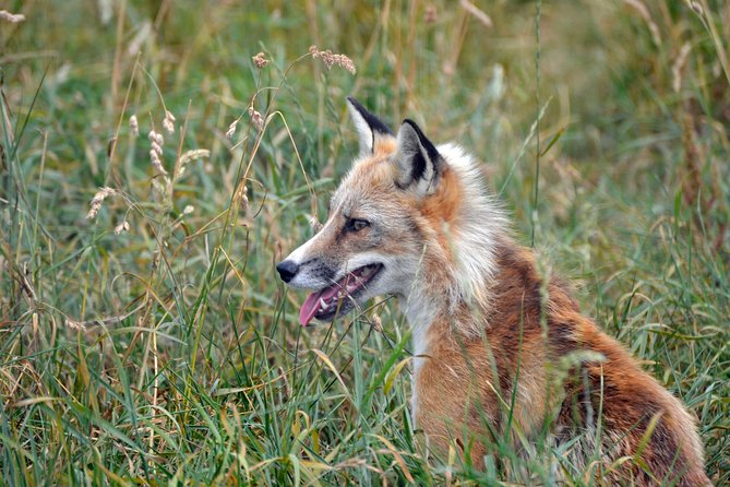 Fox Encounter for 2 people and park entry