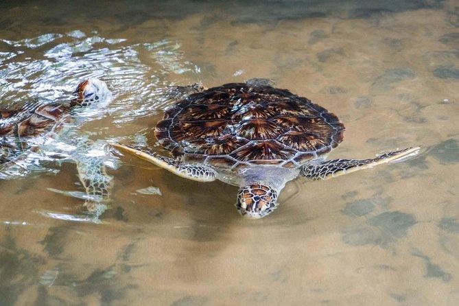 Galle & Bentota River Safari Private Tour from Cinnamon Bay Beruwala Hotel