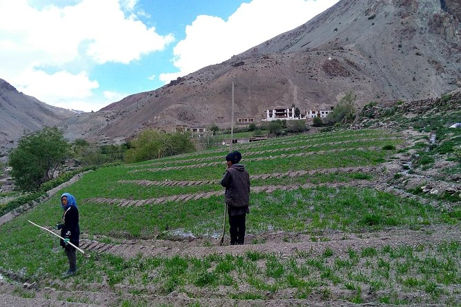 Mountain Homestays – Farming in Ladakh