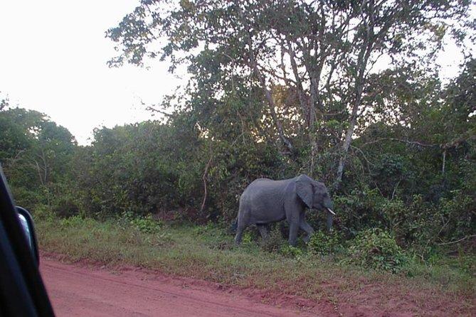 Shimba Hills National Reserve Day Tour from Mombasa/Diani Beach & surroundings