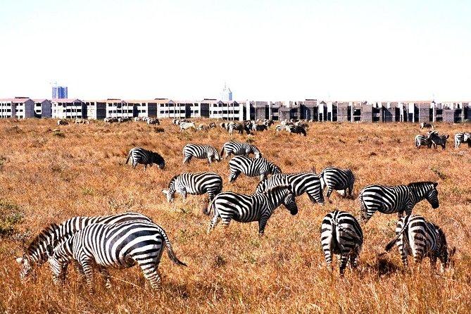 Full Day Tour Nairobi National Park, Elephant Orphanage & Giraffe Center